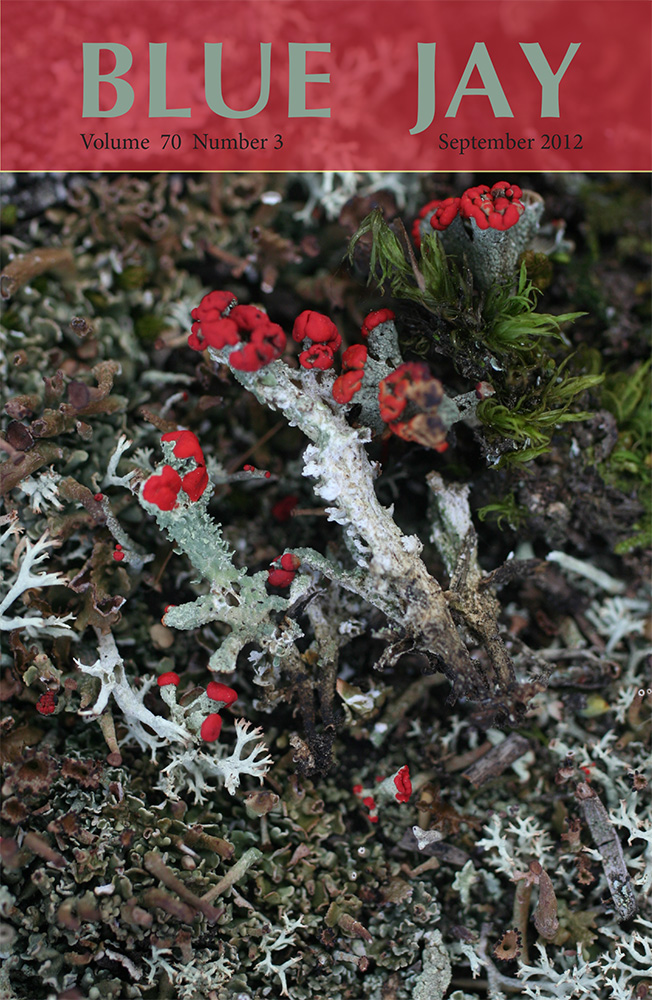 cover image featuring Cladonia cristatella (commonly known as British soldier lichen)