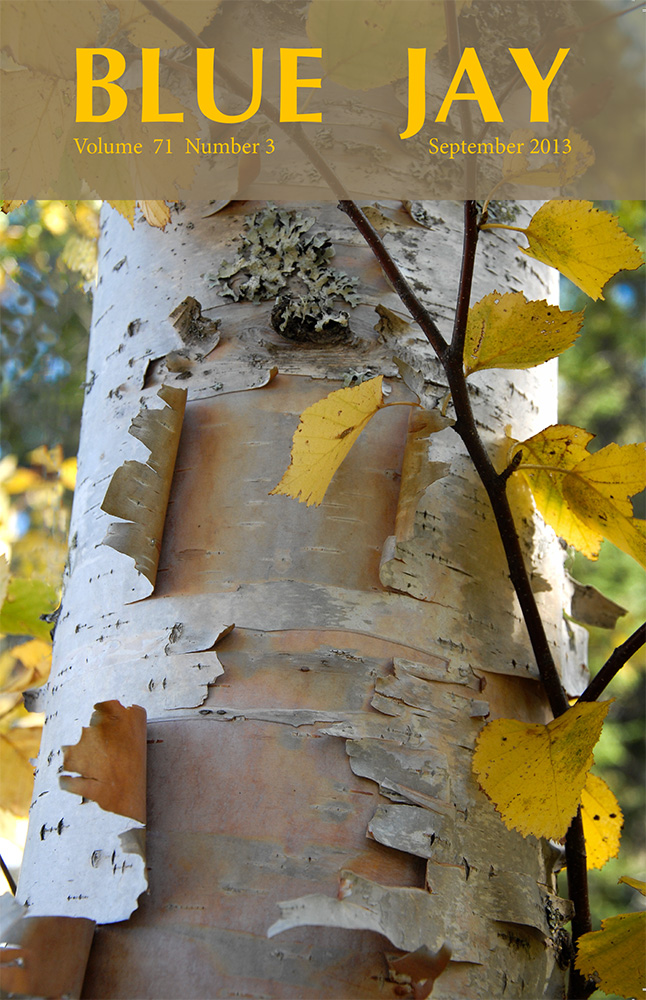 cover image featuring white birch