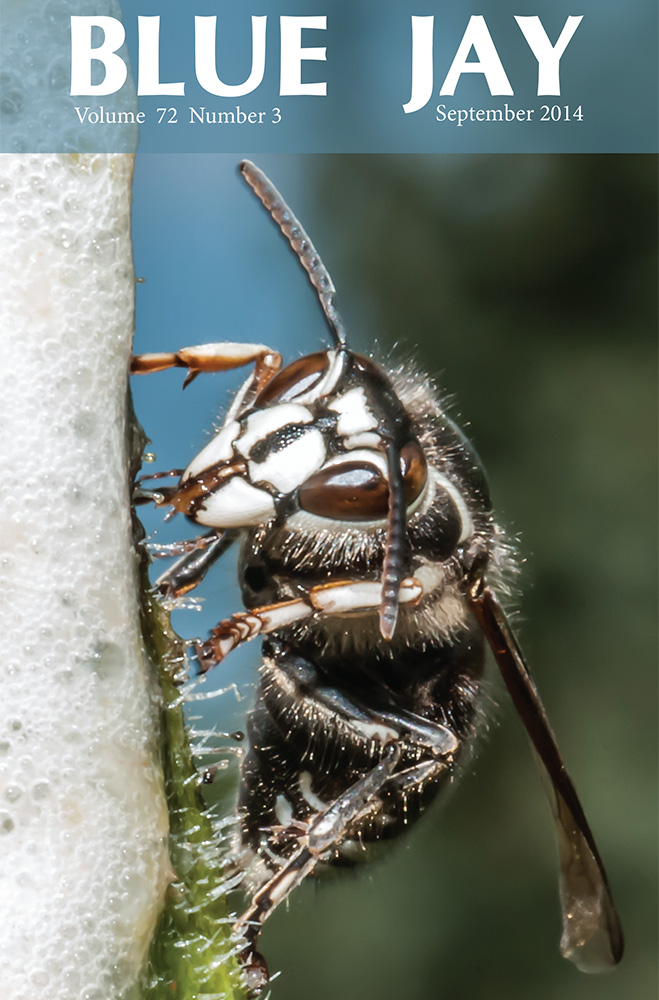 cover image featuring a bald-faced  hornet