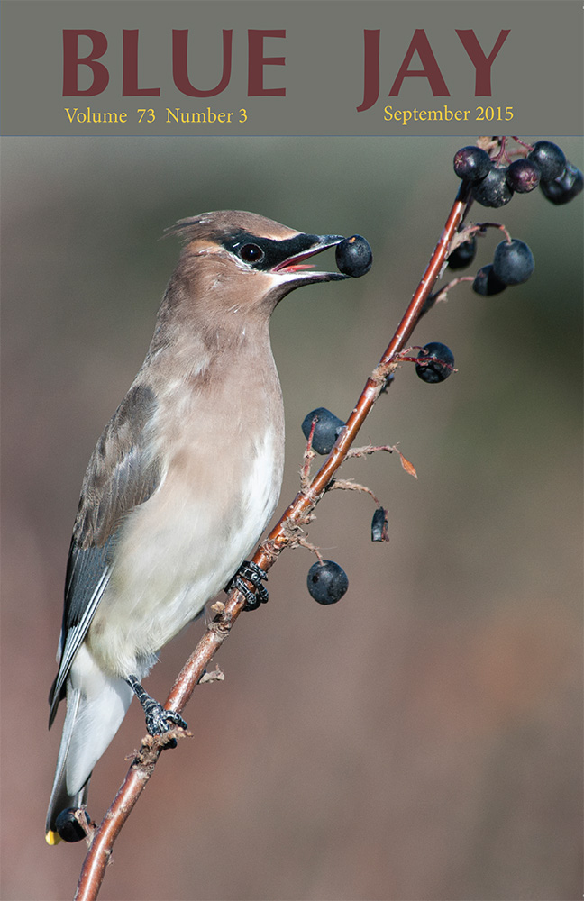 cover image featuring a Cedar Waxwing