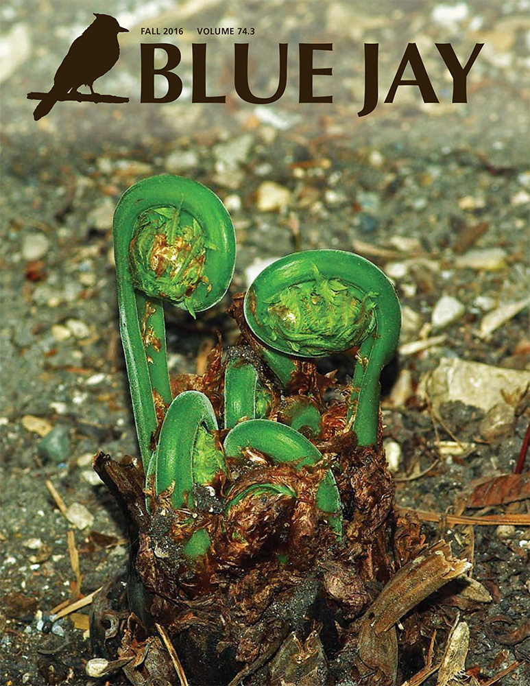 cover image featuring the leaf buds ('fiddleheads') of an ostrich fern