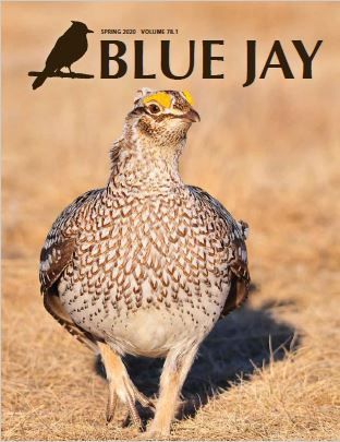 View Vol. 78 No. 1 (2020): Blue Jay Spring 2020