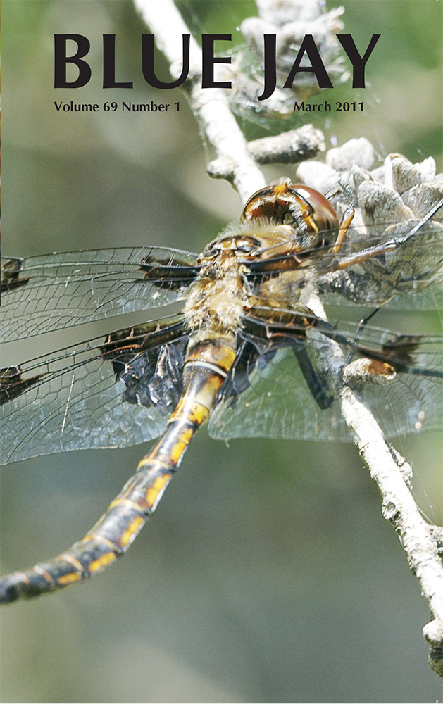 cover image featuring Prince baskettail dragonfly