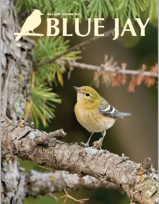 View Vol. 78 No. 3 (2020): Blue Jay Fall 2020