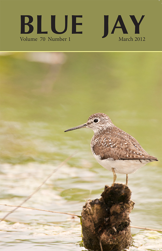 cover image featuring a solitary sandpiper