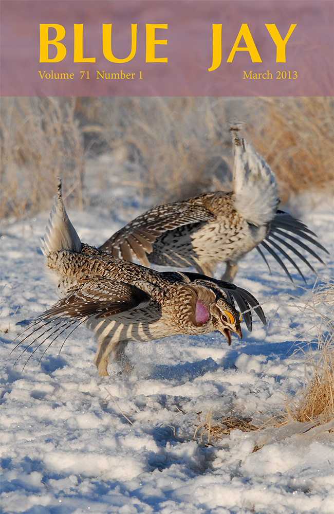 cover image featuring Sharp-tailed Grouse