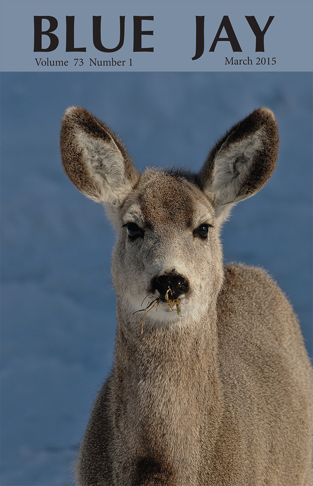 cover image featuring a mule deer