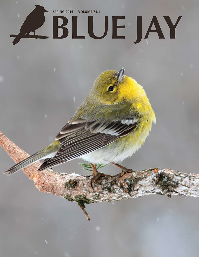 cover image featuring a pine warbler