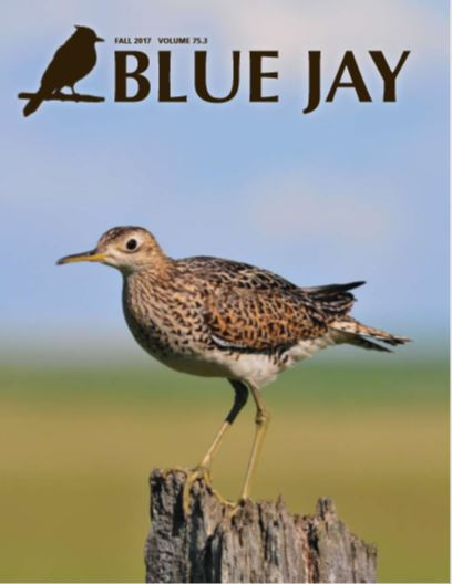 cover image featuring an upland Sandpiper