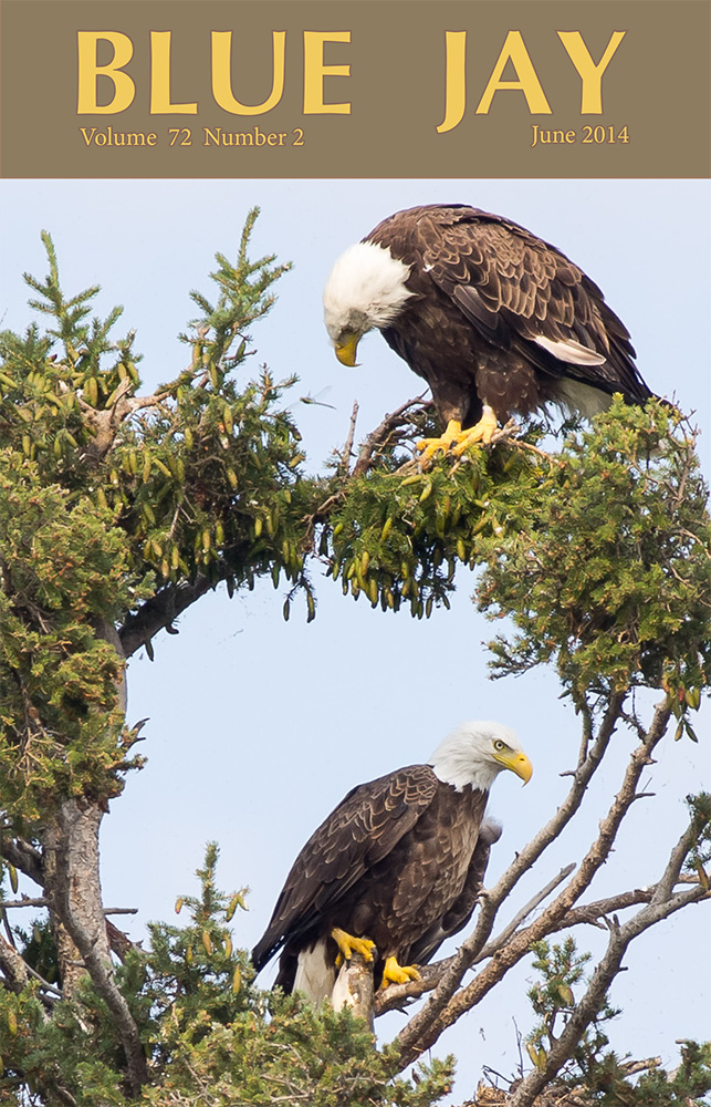 cover image featuring two bald eagles