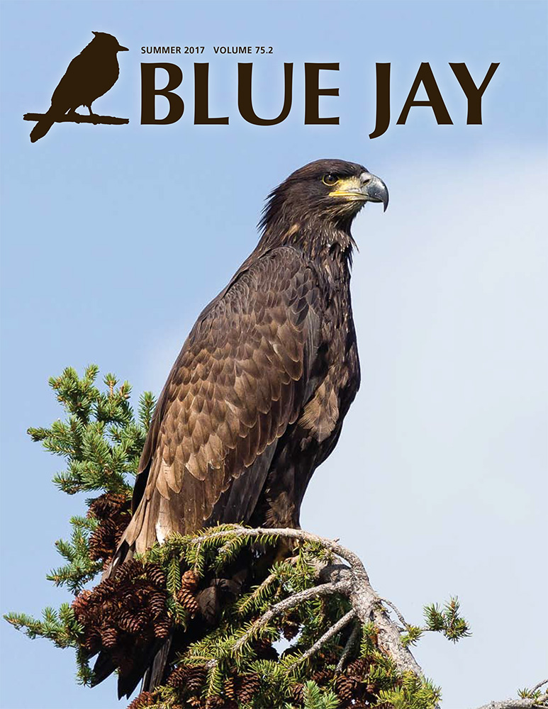 cover image featuring a female Bald eagle