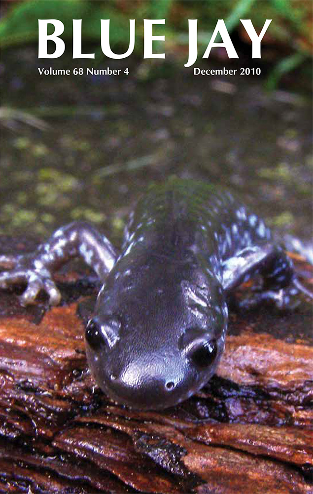 cover image featuring a blue-spotted salamander