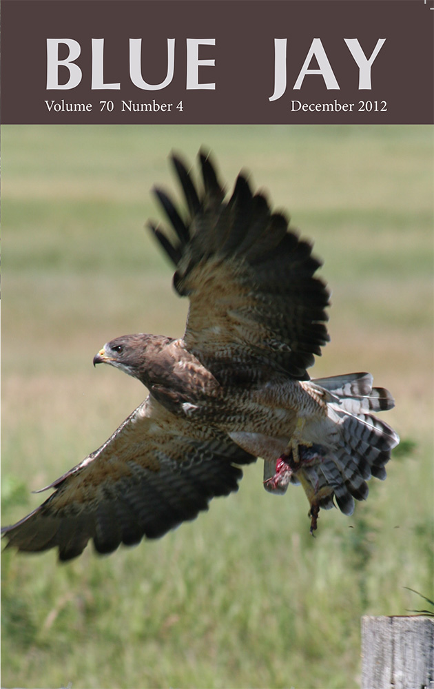 cover image featuring a Swainson's Hawk