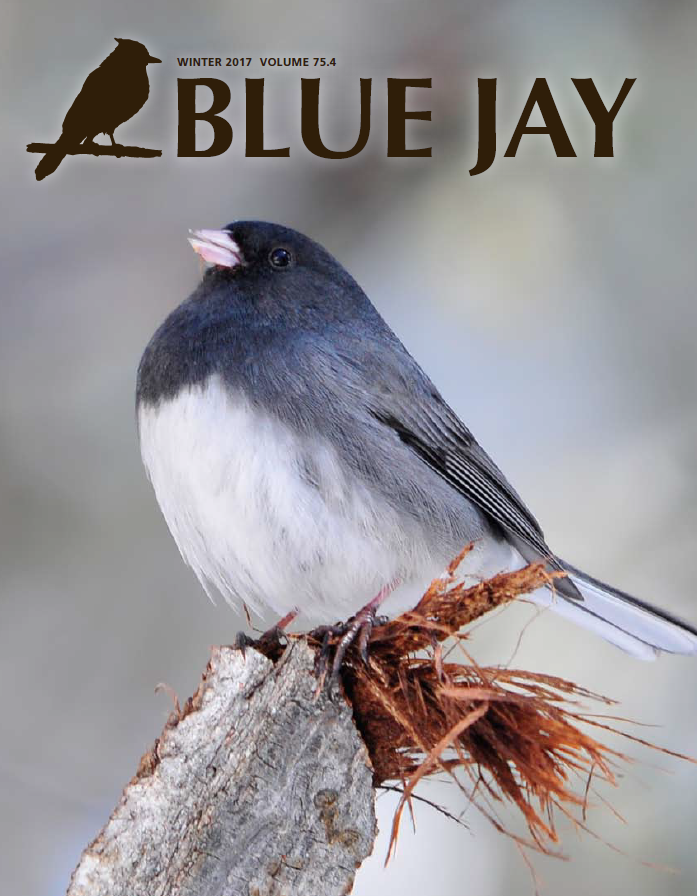 cover image featuring a Dark-eyed Junco