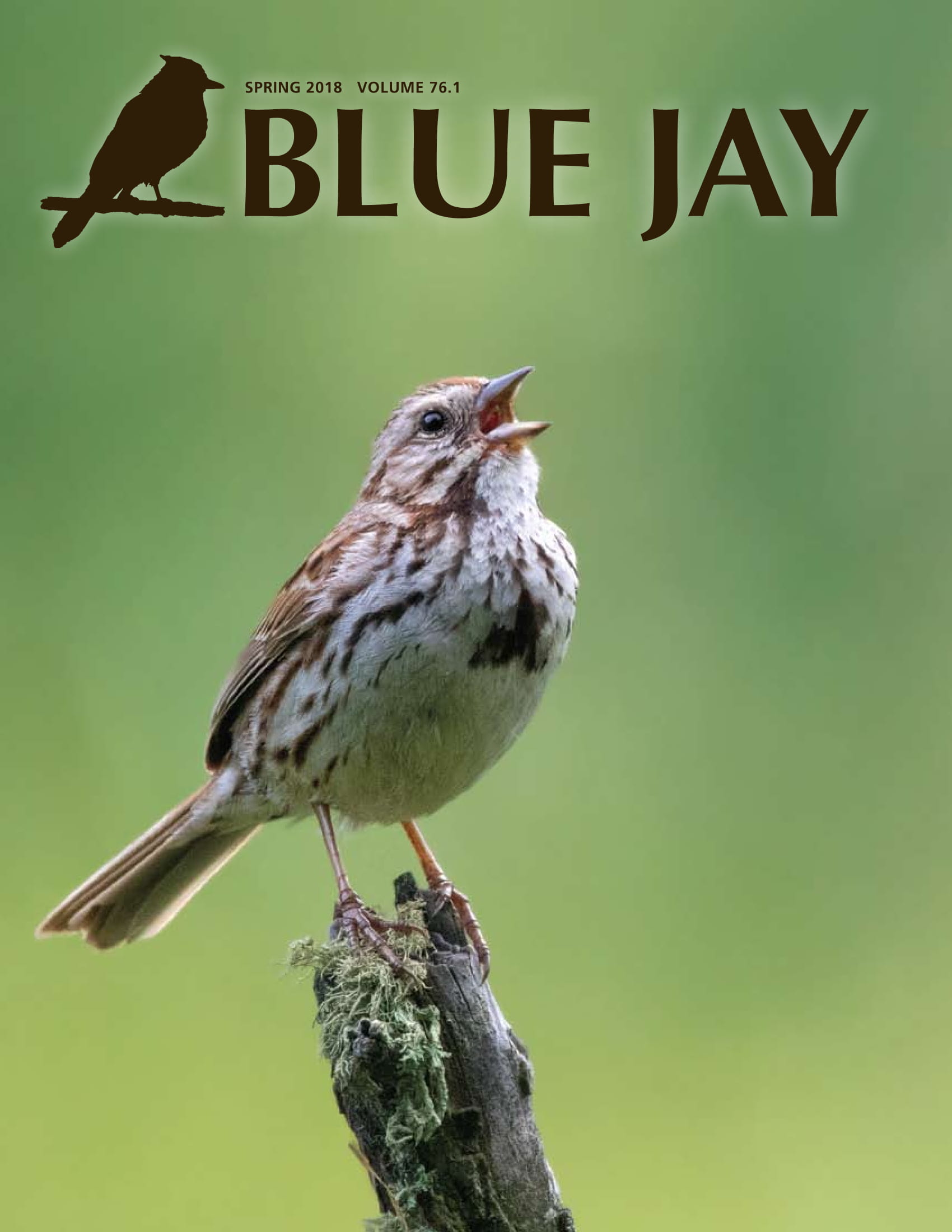 cover image featuring a song sparrow