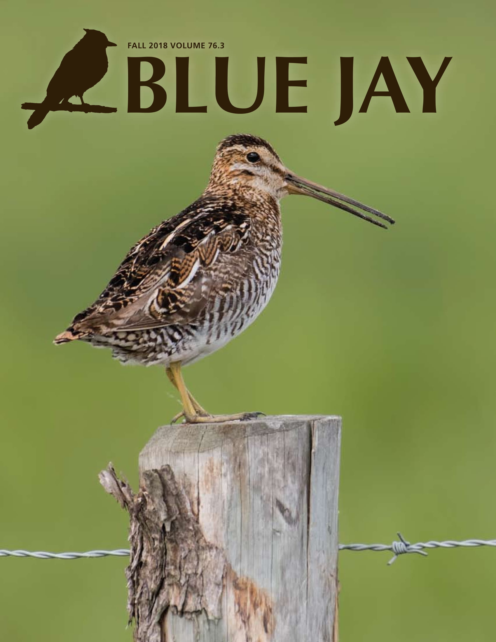 cover image featuring a Wilson's Snipe
